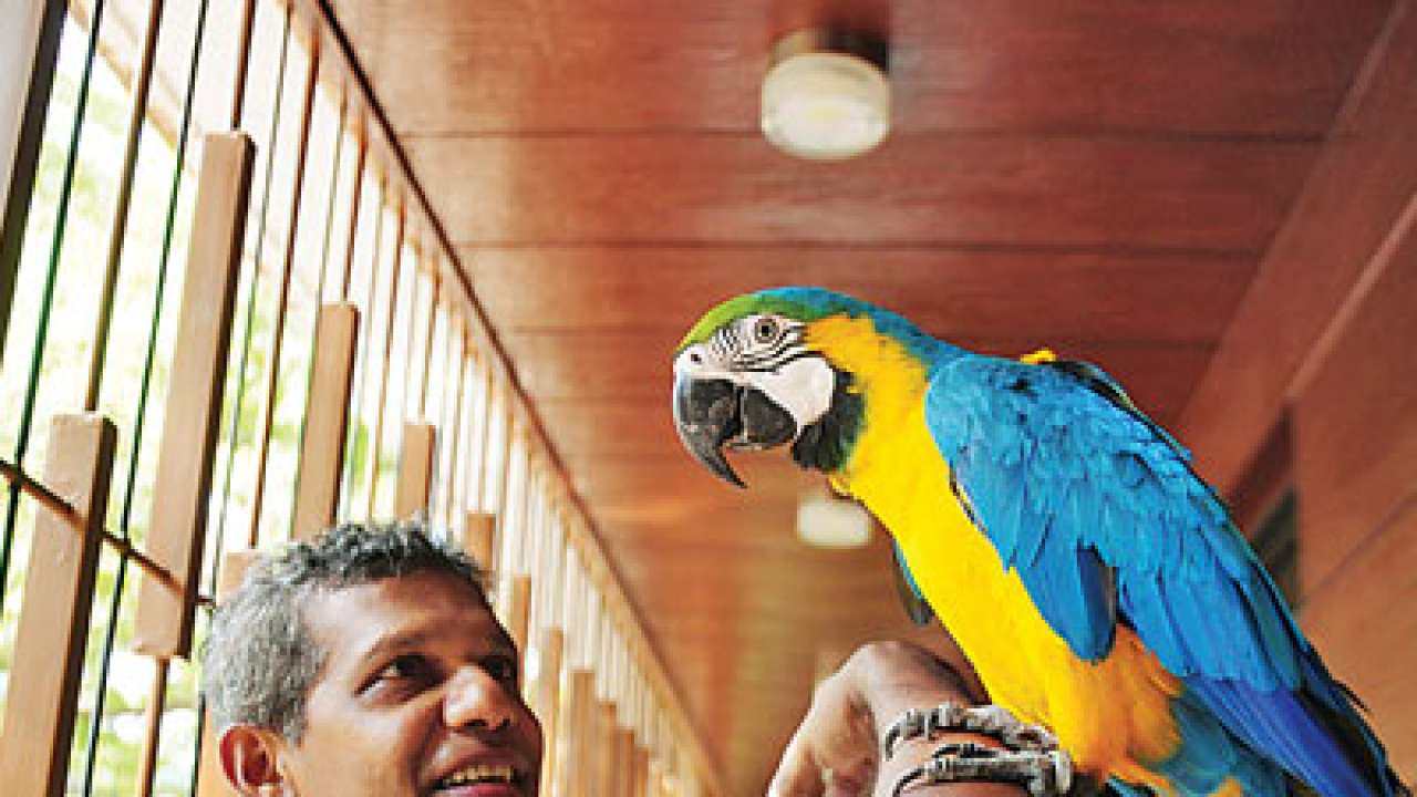 Is your bird male or female? Run DNA test to know