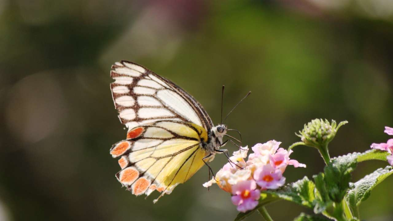 The little known Butterfly Garden of Pune