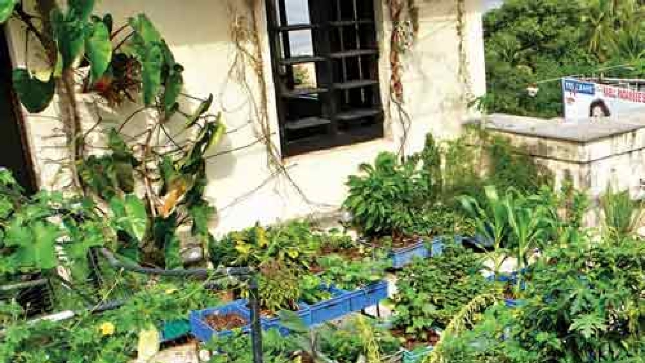 How To Grow Vegetables On Your Terrace And Balcony