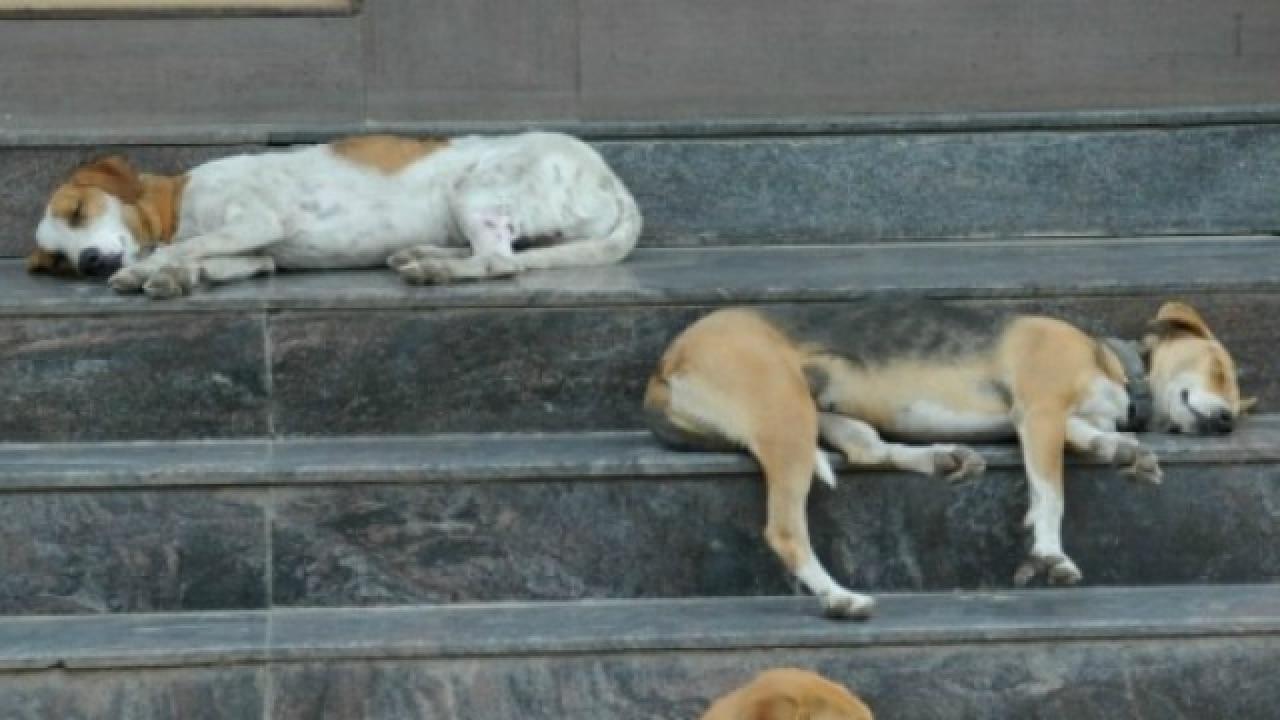 Mumbai through the eyes of a stray dog