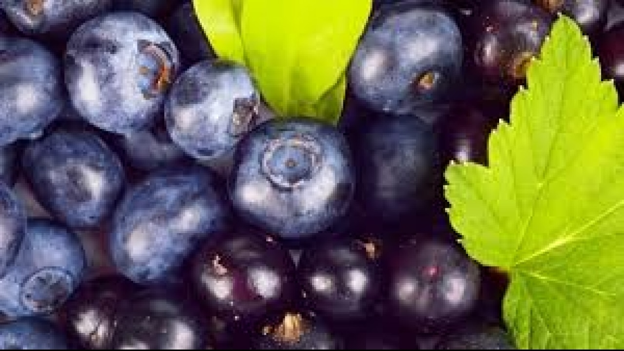 Blueberries: health benefits and harm 20