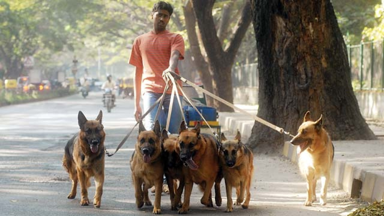 Pedigree dogs are now going stray