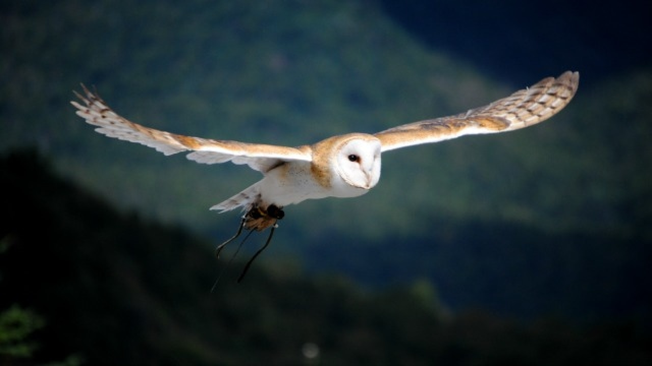 Scientists Use Owl Inspired Wing Design To Reduce Wind Turbine Noise