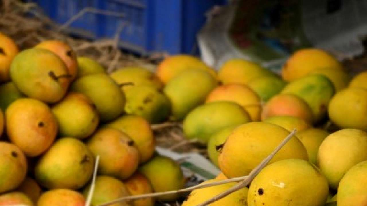 Minister blames Centre for mango export ban