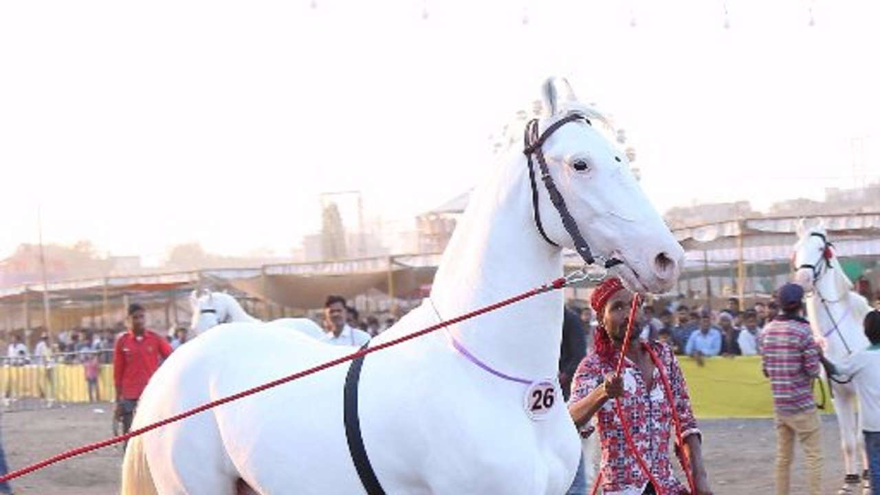 Chetak Festival Concludes With Sale Of 1053 Horses Worth Rs 3 57 Crore