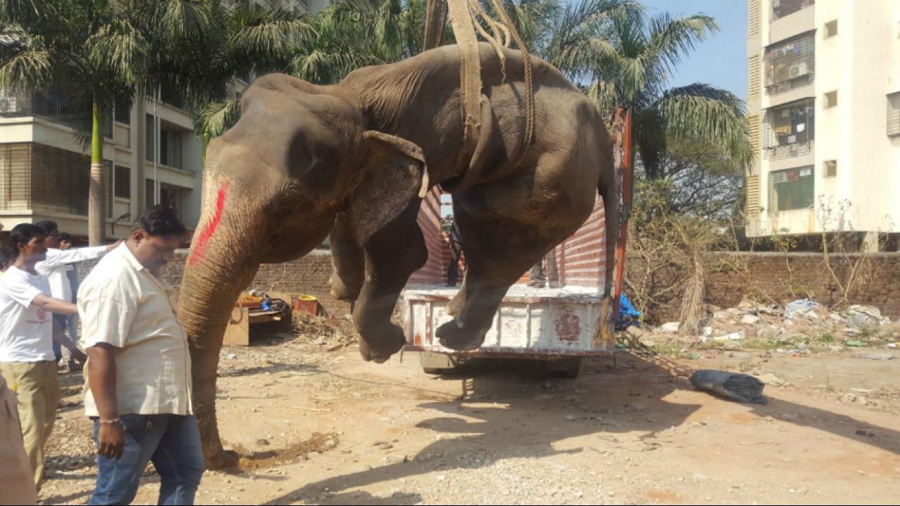 Maharashtra Elephant Laxmi Dies At Dahisar Activists Demand Detailed Enquiry Elephant rabbit drawing child, elephant, elephant with pink umbrella illustration, painted, animals png. maharashtra elephant laxmi dies at