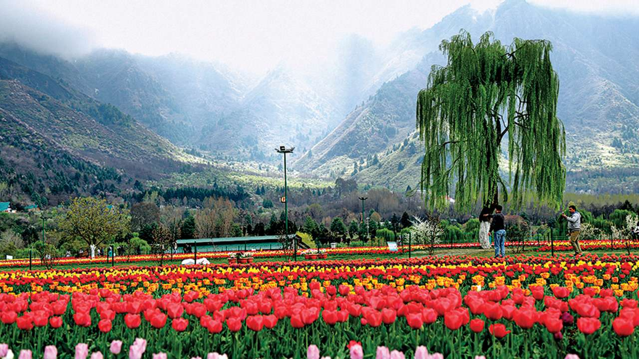 Spring in paradise: Tulips all set to crown Kashmir