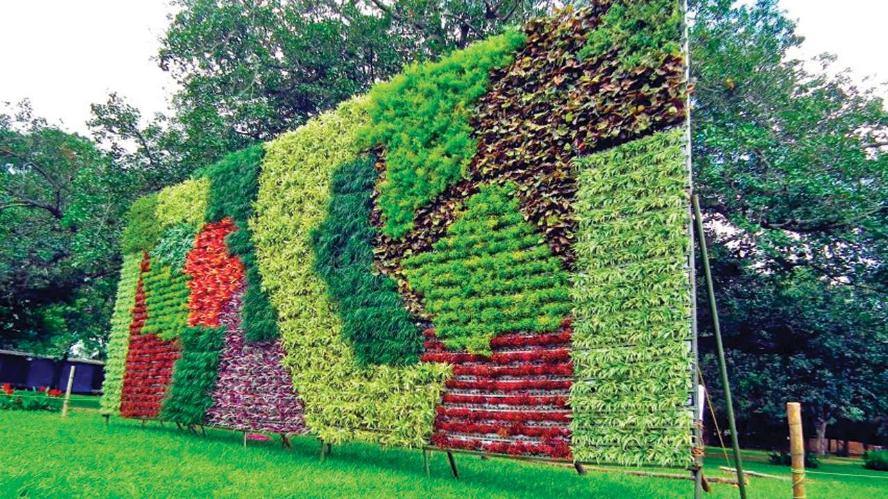 Go Green  Delhi Government Promotes Vertical Gardening To