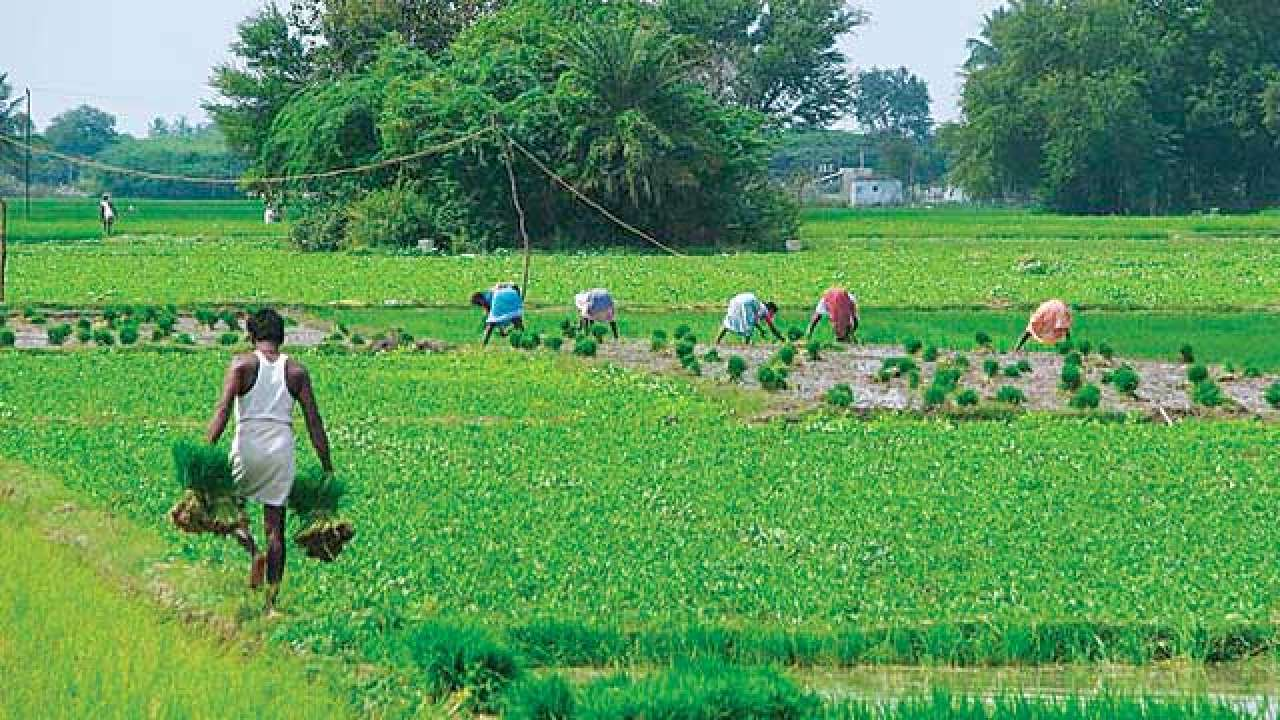 Kerala govt announces slew of measures to revive ...