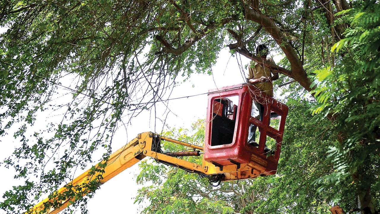 Ay High Court Tells Bmc To Submit Pics Of Trees Replanted In Place The Ones Cut Down