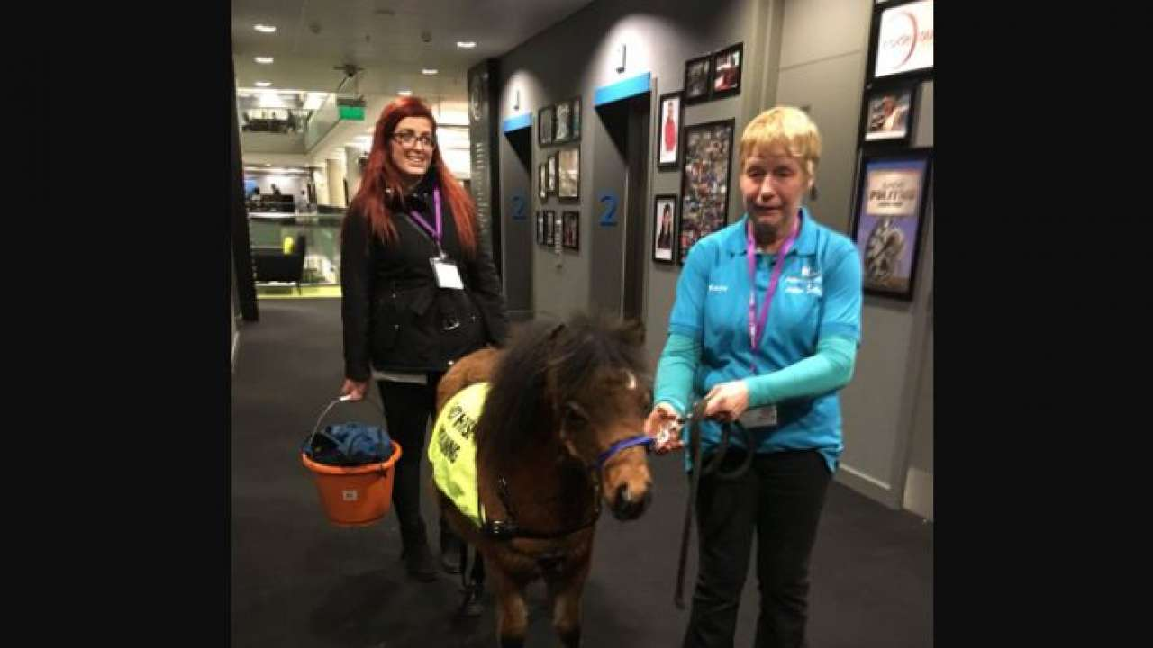Digby, the miniature guide horse