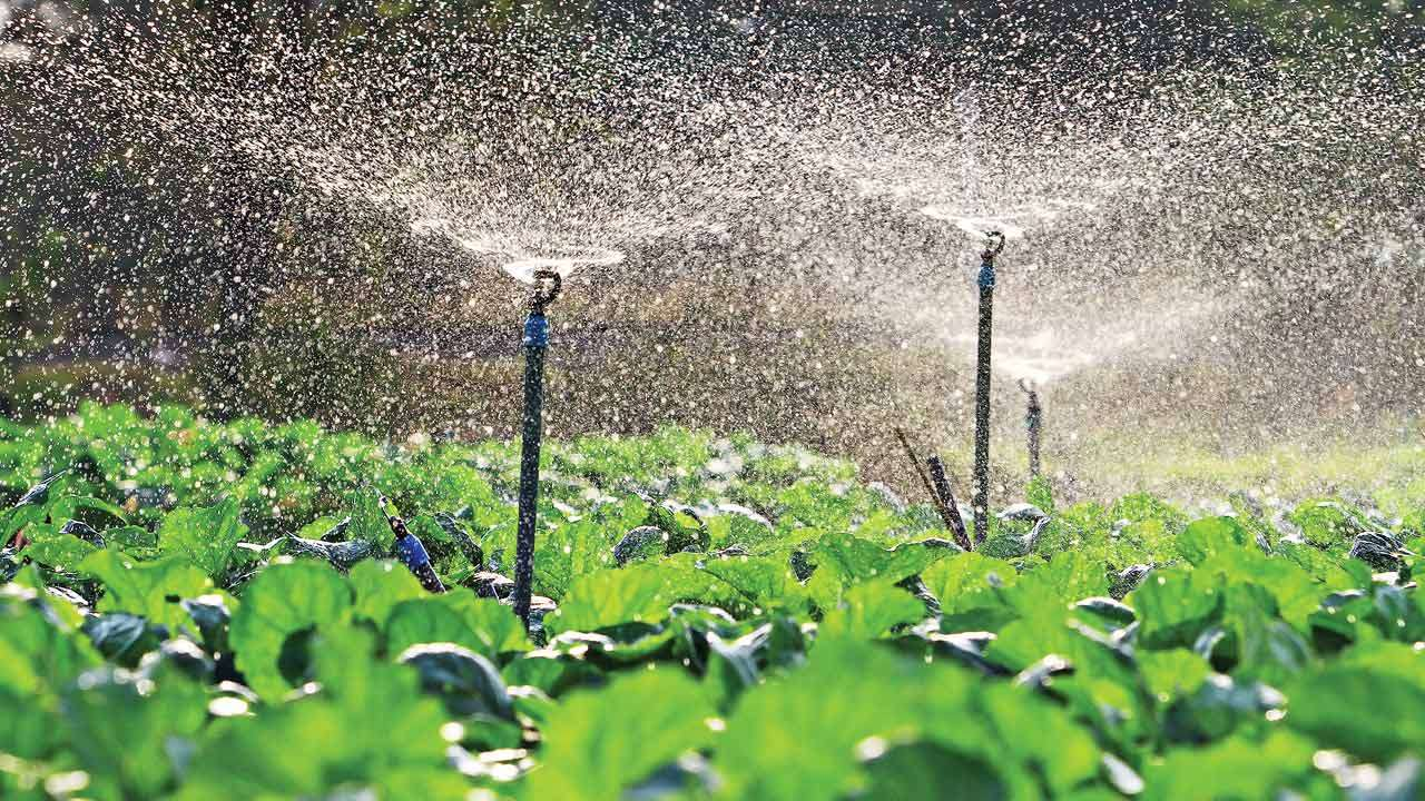 Drip Irrigation Can Raise Foodgrain Output 40