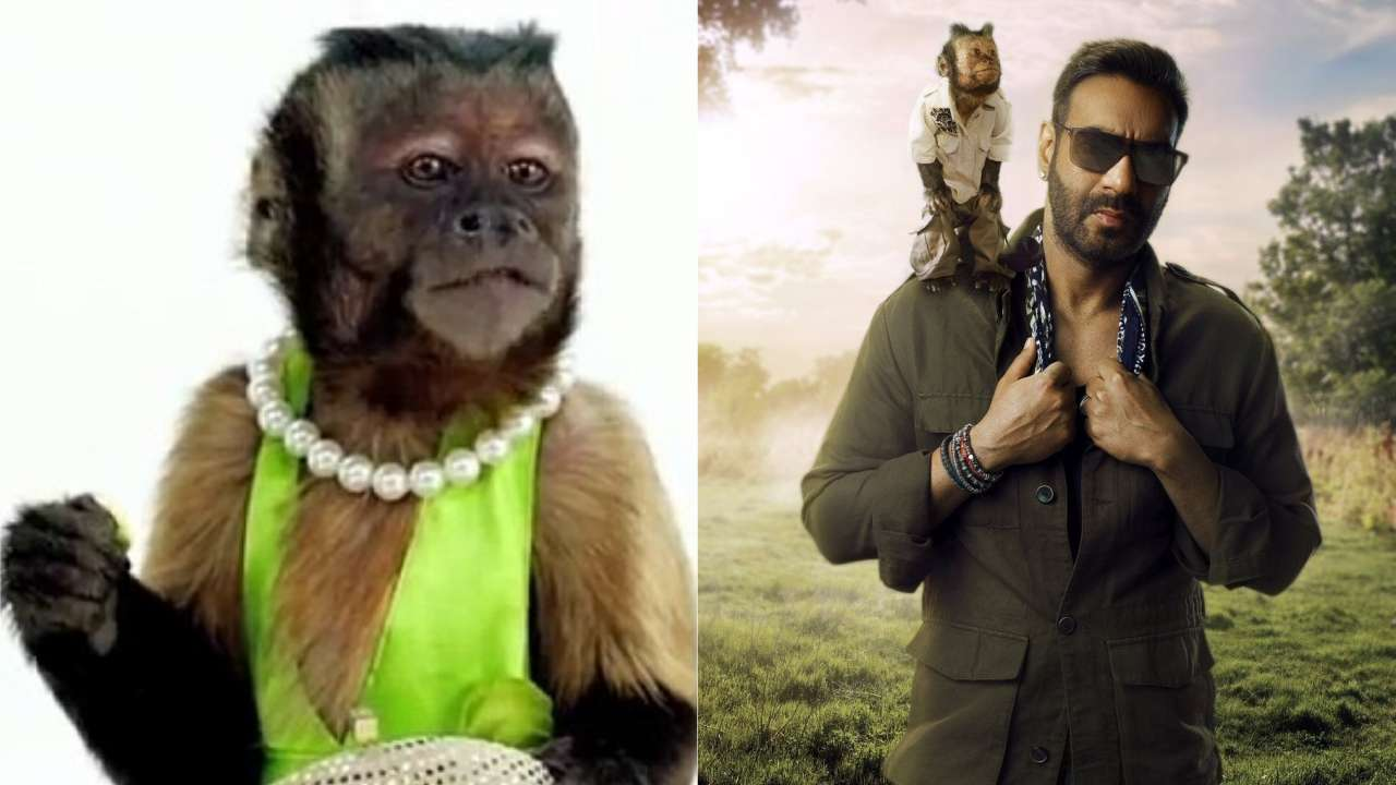 Hangover's famous monkey Crystal set to make his Bollywood debut with Ajay Devgn's 'Total Dhamaal'