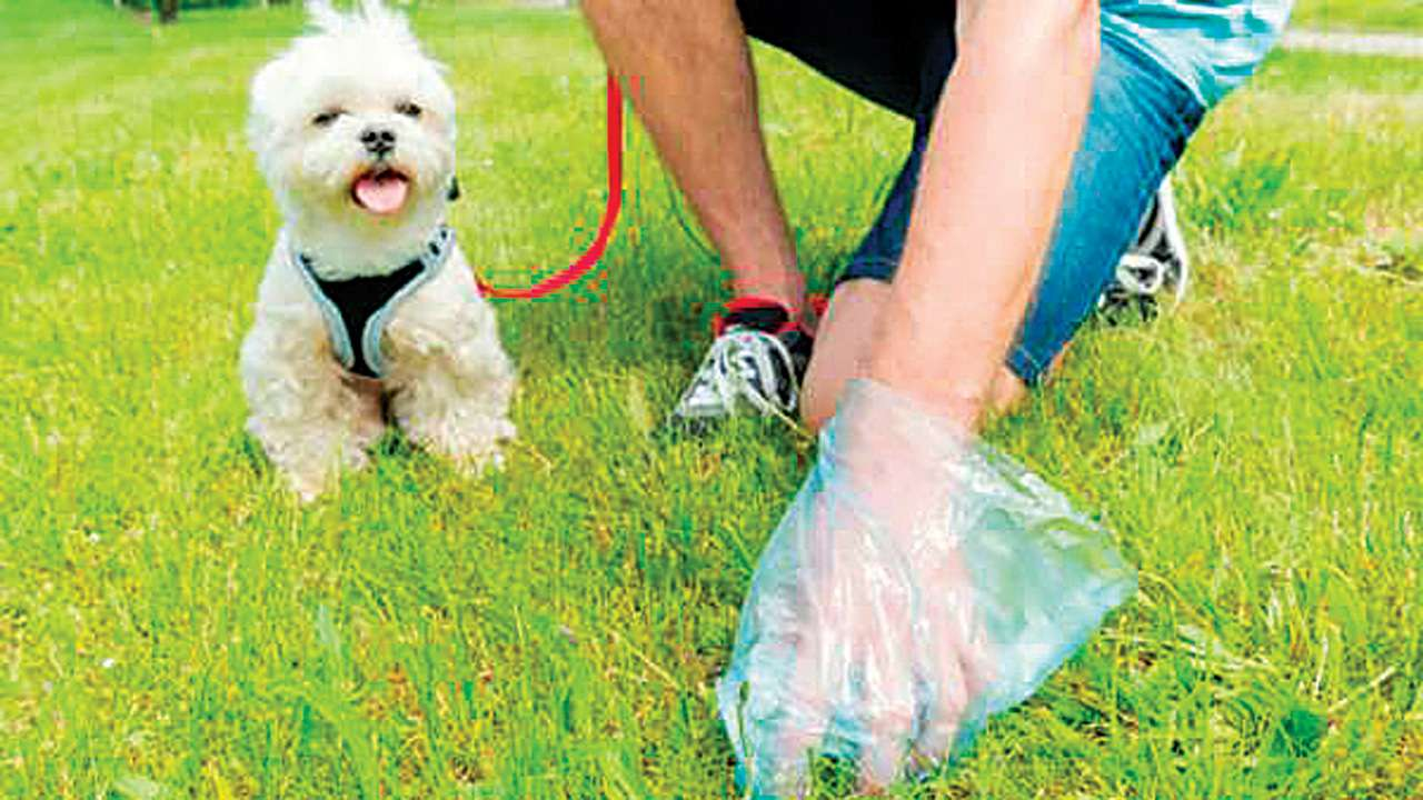Mumbai: Charkop locals campaign to get dog owners to scoop the poop