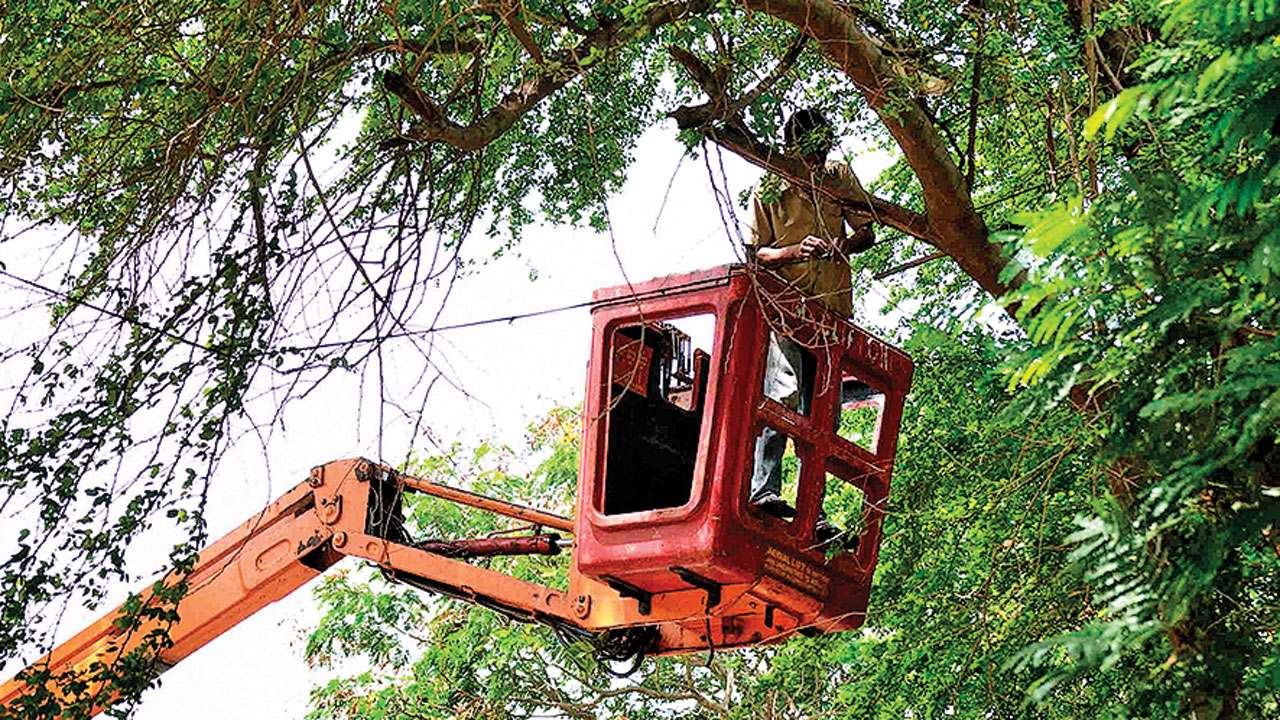 BMC delays assigning contractor for tree trimming