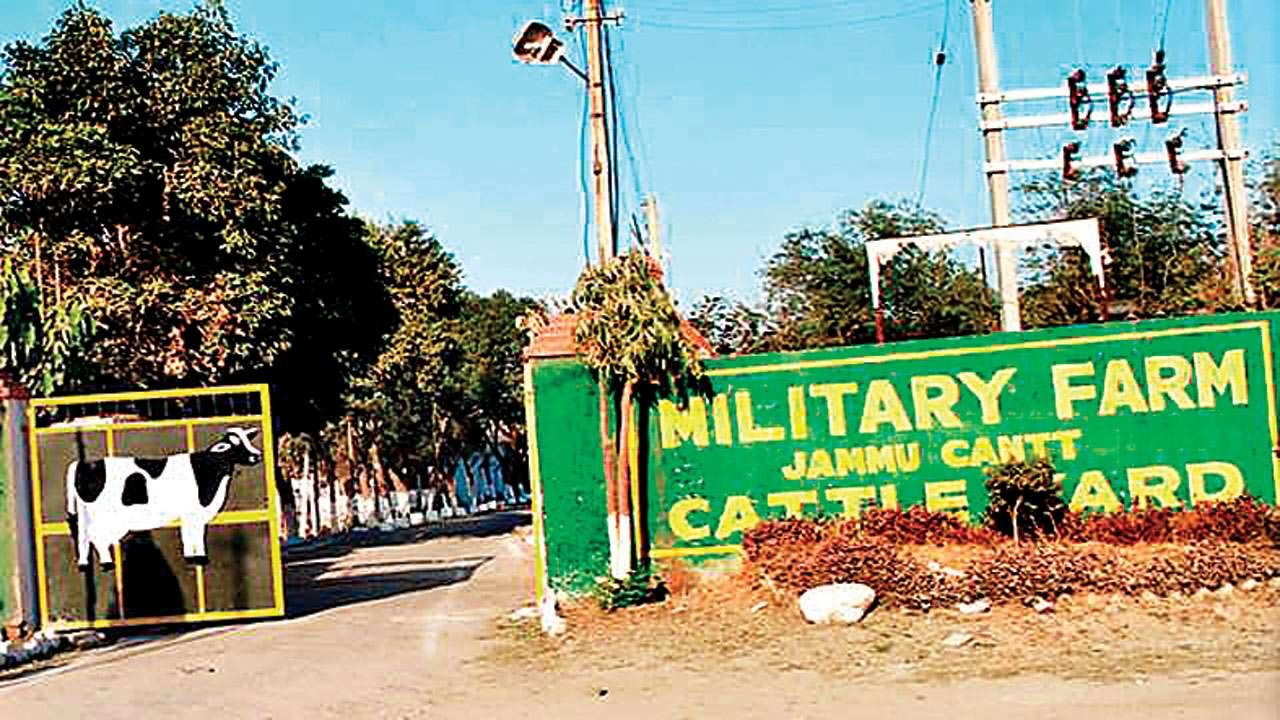 No takers for military farm cows, Indian Army spends Rs 280