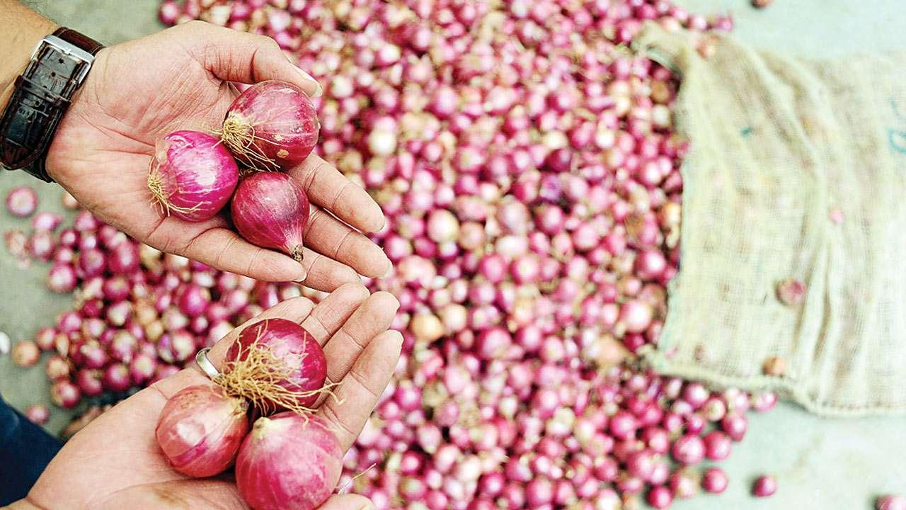 Maharashtra: Rainfall makes onion prices rise to Rs 50/kg