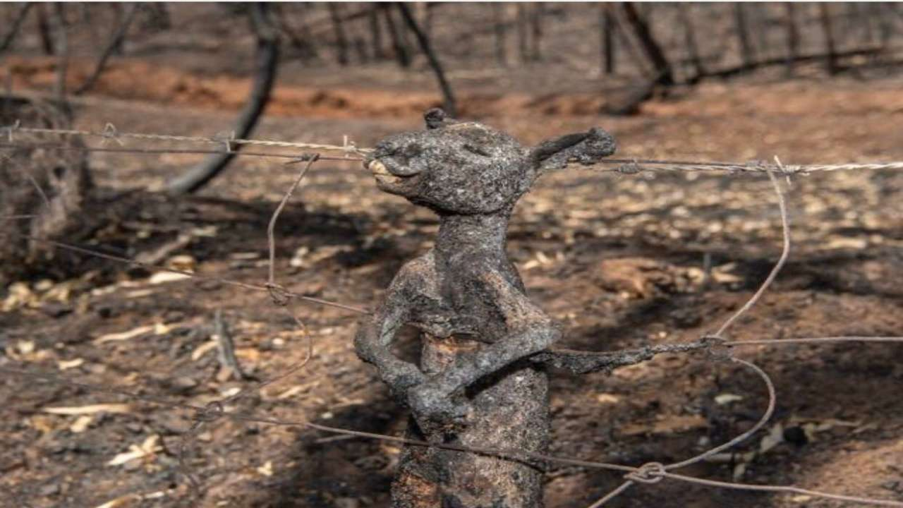 Image result for australia fire images kangaroo