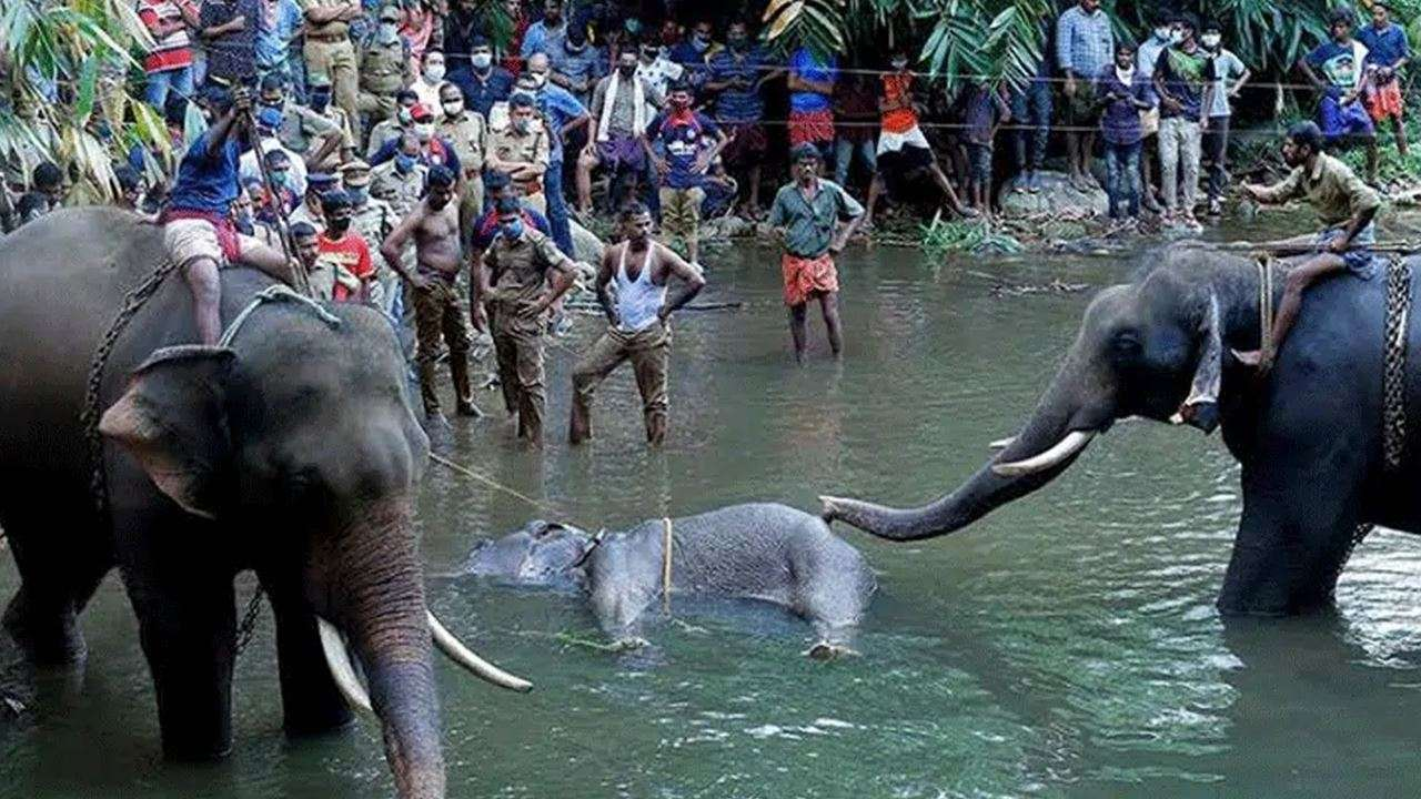 No evidence to prove elephant was fed cracker-stuffed pineapple: Kerala probe report to governor