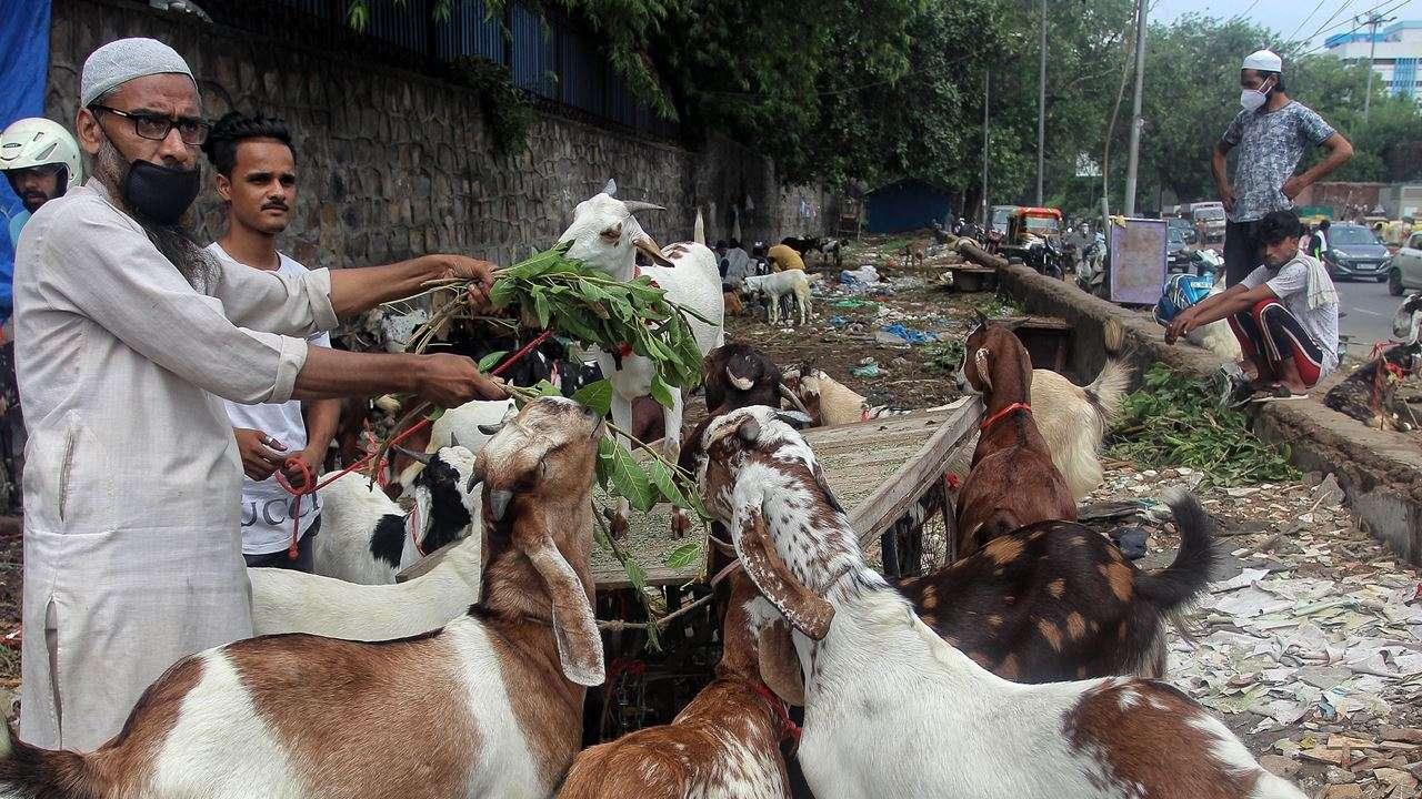 Eid ul-Adha 2020: Now, buy goats online in Mumbai