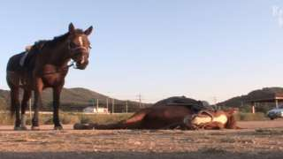 'Oscar winning performance!': This horse plays dead whenever som...