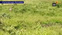 Man-eating tiger captured in Karnataka's Chamarajanagar
