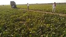 'Indian Jugaad': Farmers use loudspeakers to stop locusts at...