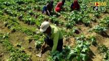 Farmers laud new agriculture reforms
