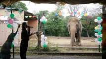 How Russia, India helped world's 'loneliest' elephant reach its new ho...