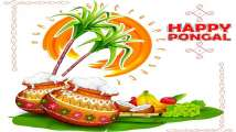 Pongal 2021: Best Whatsapp greetings, wishes, quotes to share with you...