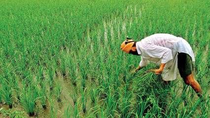 , PM Kisan Samman Nidhi Yojana: Farmers likely to receive Rs 4,000 quarterly? Know details, steps to apply, last date,